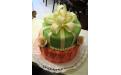 Masnis torta ALK2018 - erre az alkalmi torta kódra hivatkozzon! Telefon: +36 1 318 8315