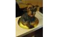 ÁLL2052  - erre az állatos torta kódra hivatkozzon!