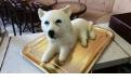ÁLL2078  - erre az állatos torta kódra hivatkozzon!
