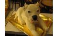 ÁLL2028  - erre az állatos torta kódra hivatkozzon!