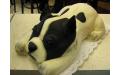 ÁLL2025  - erre az állatos torta kódra hivatkozzon!