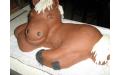 ÁLL2015  - erre az állatos torta kódra hivatkozzon!